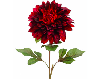 Large Red Dahlia
