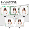 Entire Eucalyptus Collection