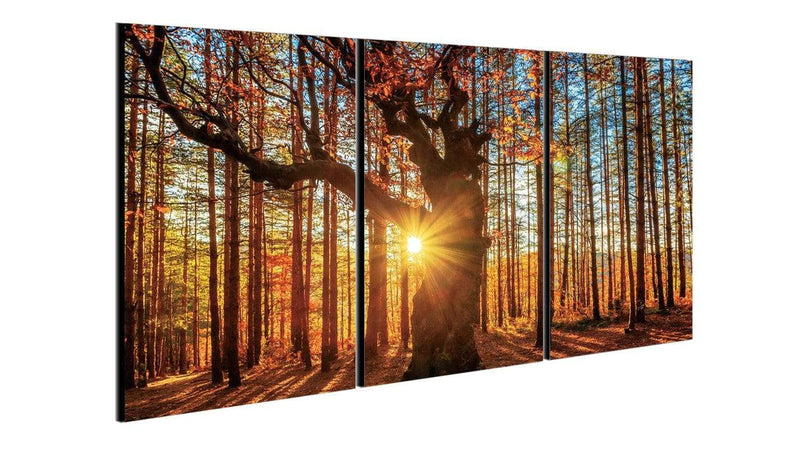 Chic Home Decor Botanical Forest 3 Piece Set Wrapped Canvas Wall Art Giclee Print Sunrise in Woods-
