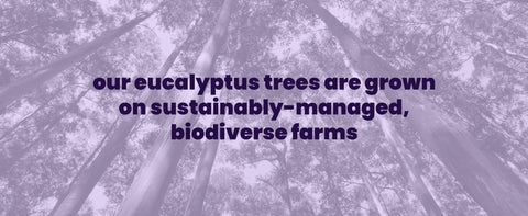 our trees are sourced from sustainably managed farms all over the world
