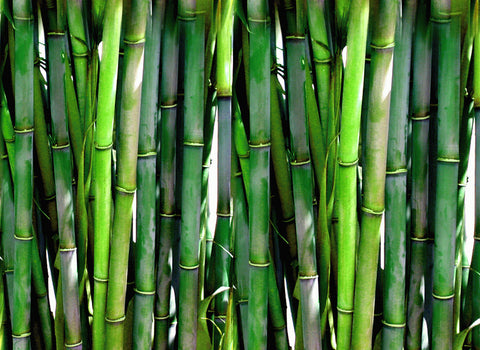 bamboo is not sustainable