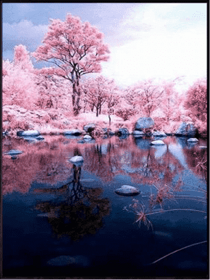 Cherry Tree Lake - Paint by Numbers Kits for Adults DIY