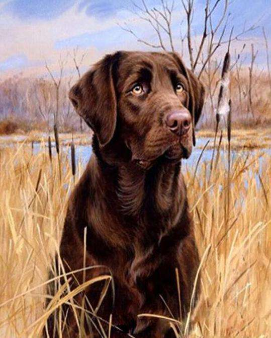 Chocolate Labrador Dog - Paint by Numbers Kits for Adults DIY - Paint by Numbers for Adults