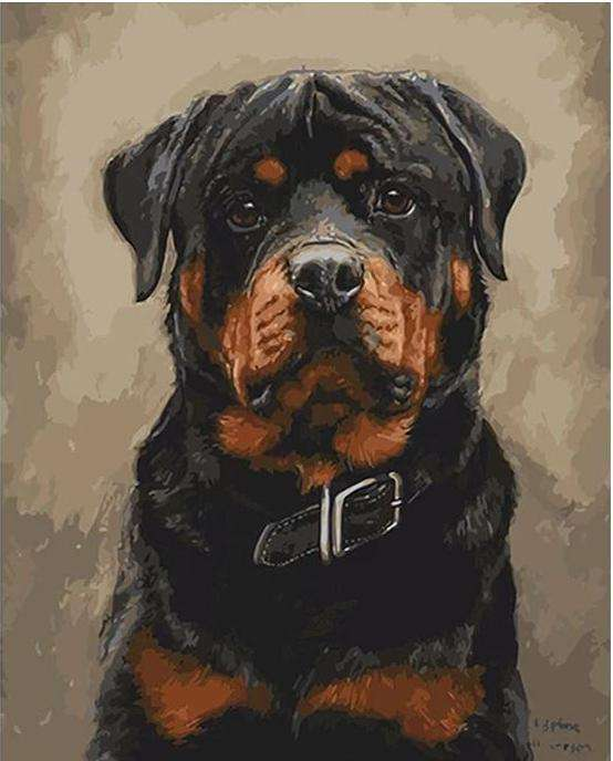Rottweiler Dog - Paint by Numbers Kits for Adults DIY - Paint by Numbers for Adults
