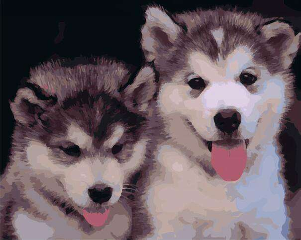 Siberian Huskies - Paint by Numbers Kits for Adults DIY