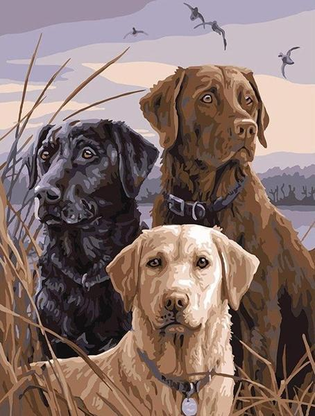 Three Beautiful Dogs - Paint by Numbers Kits for Adults DIY - Paint by Numbers for Adults