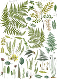 Fronds Botanical IOD Decor Transfer