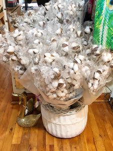 Cotton Stems