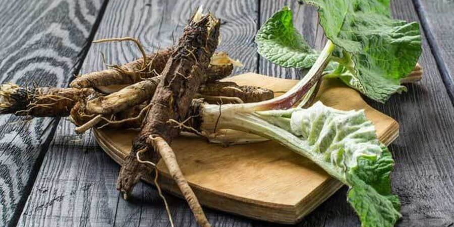 using burdock root