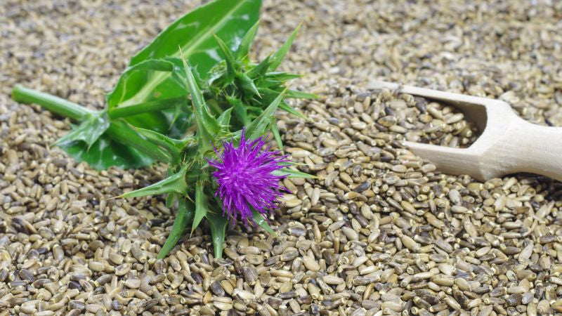 forms of milk thistle