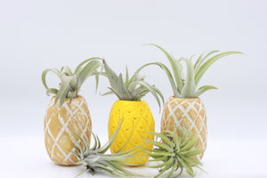PINEAPPLE EXPRESS AIRPLANT