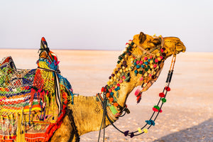 Camel Photography on ABS