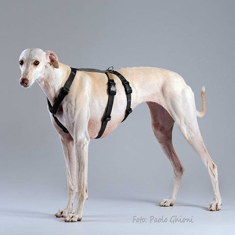 Haqihana Double H Harness - Small