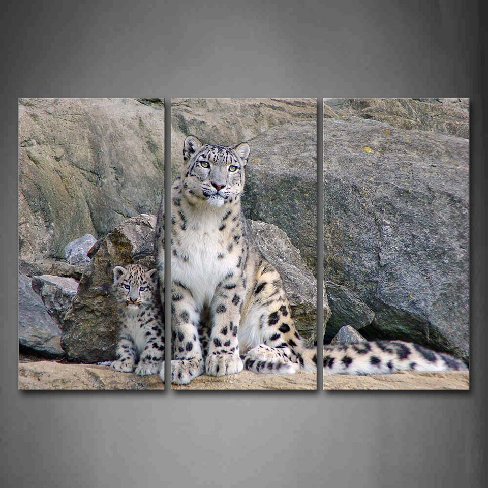 Snow Leopard With Cubs Three Piece Canvas