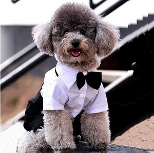 Glamorous Suit For Your Fur Babies Special Occasions