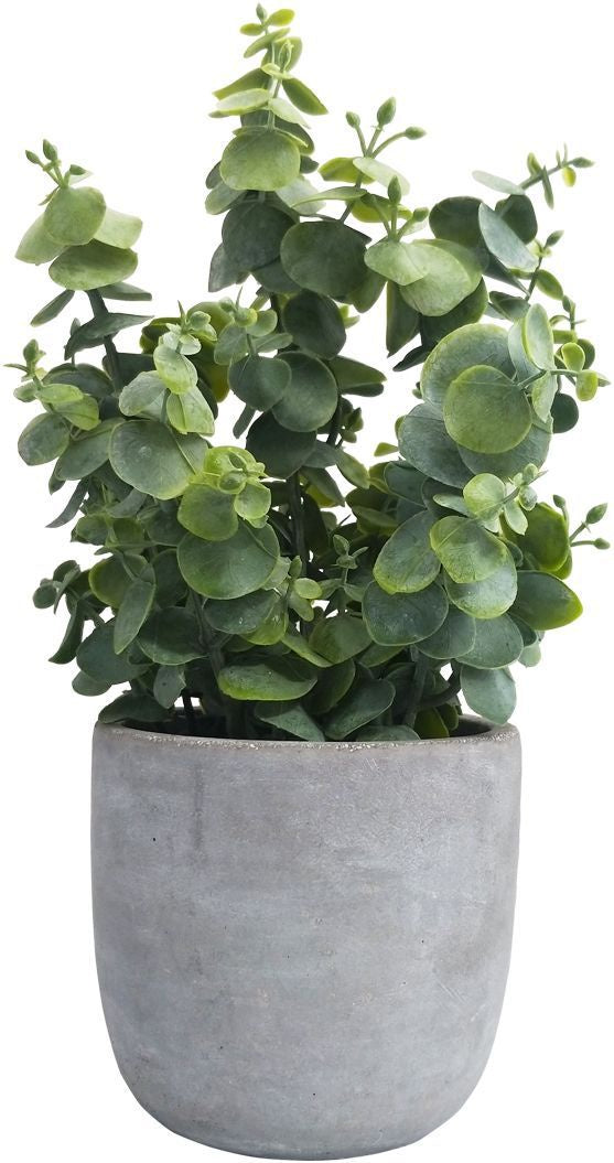 Eucalyptus Potted Green Med