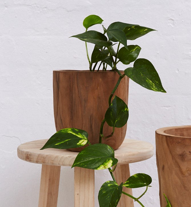 Iniko Tree Root Wood Planter - Small
