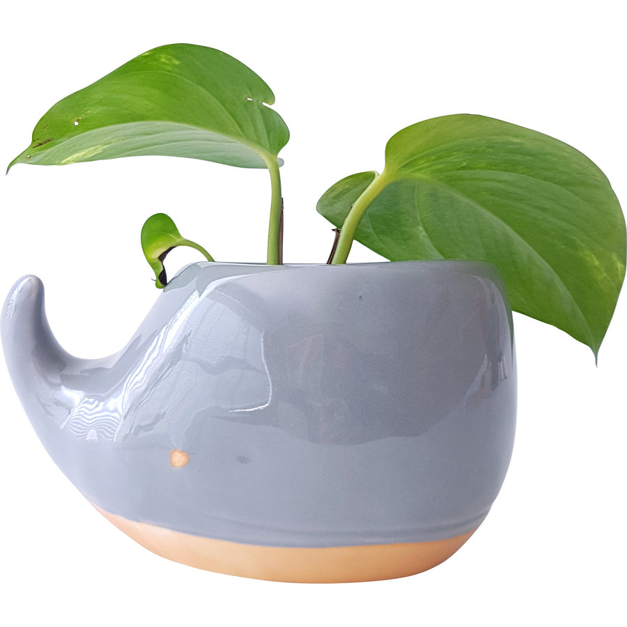 Whale Planter Grey