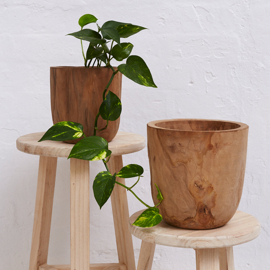Iniko Tree Root Wood Planter - Large