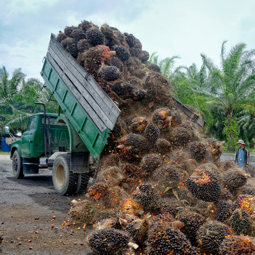 Breaking the palm oil habit