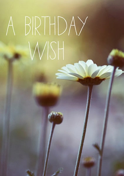 Postkaart - Alicia Bock - a birthday wish