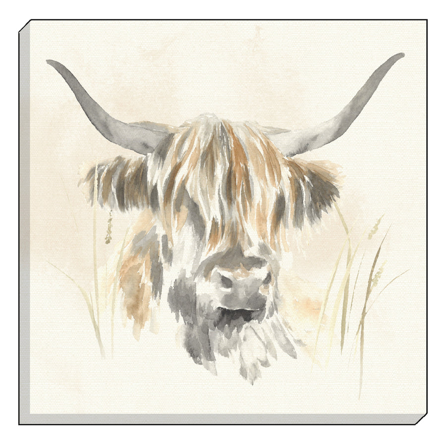 Watercolour Highland Cow Canvas