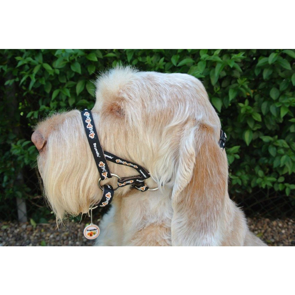 Dogmatic Padded Head Collar - stop your dog pulling