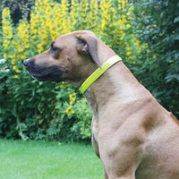 "Rosewood Reflective Yellow High Vis Collar Large 40-63cm / 16""-25"""