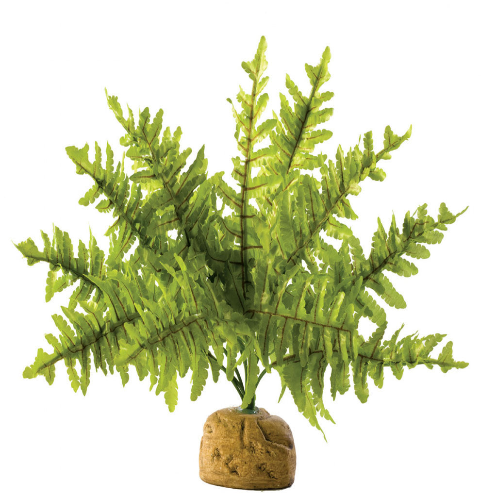 Exo Terra Boston Fern Medium