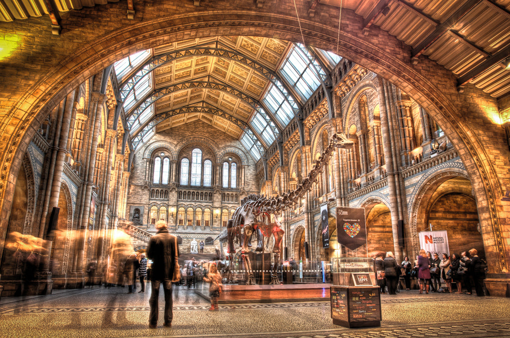 Architectural London - The Natural History Museum (#ARCH_LONDON_07)
