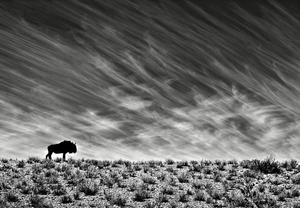Wildlife Photographer of the Year - Desert survivor (#WILDLIFE_04)