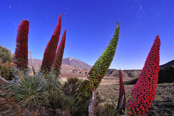Wildlife Photographer of the Year - Flowers of the volcano (#WILDLIFE_15)