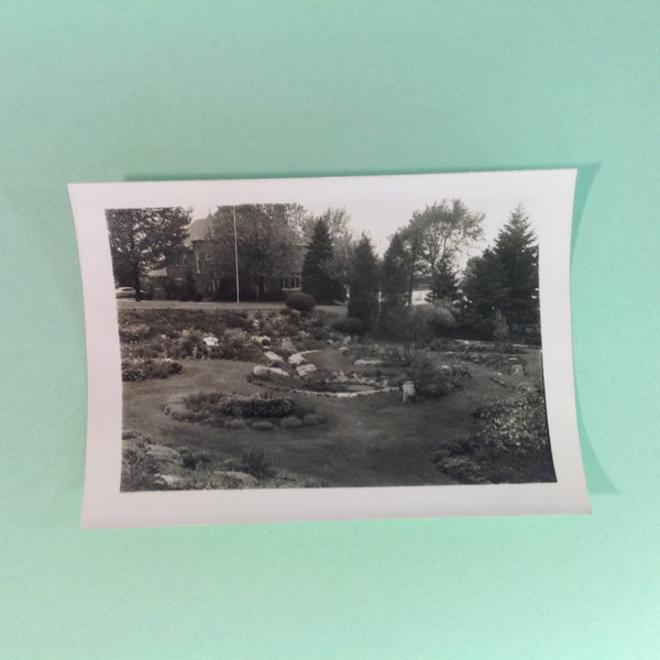 Vintage Mid Century B&W Photo Holland Michigan Tulip Festival Idyllic Garden