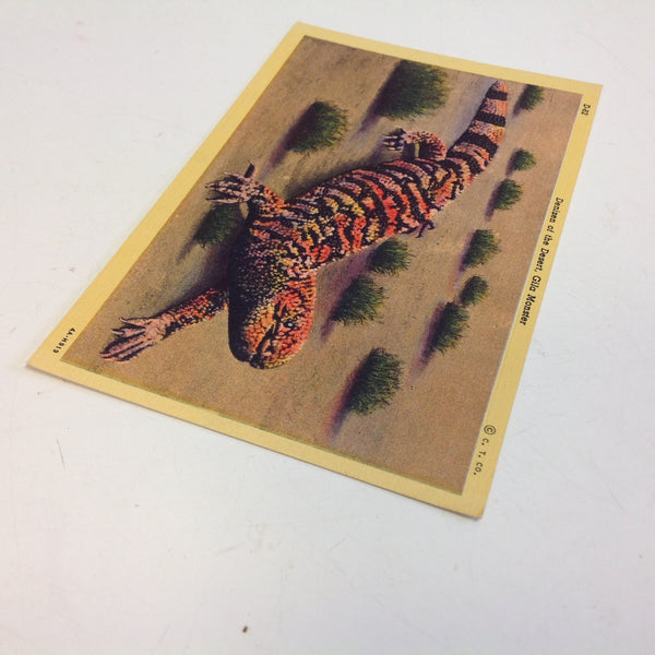Vintage Curteich Color Postcard Denizen of the Desert Gila Monster Tucson Arizona