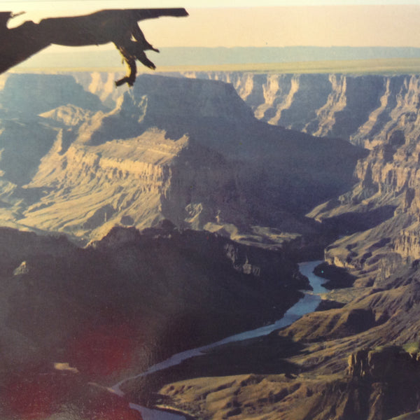 Vintage Petley Studios Souvenir Color Postcard Aerial View Colorado River Grand Canyon National Park Arizona