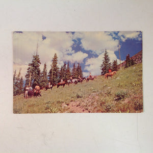 Vintage Mid Century Color Souvenir H S Crocker Postcard Horseback Trip in the Rockies Colorado