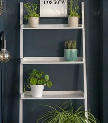 Shelving Plants