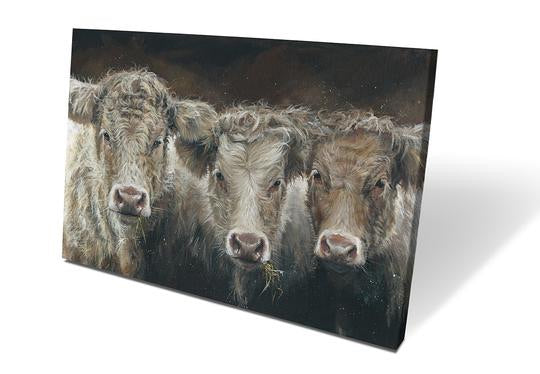 Trilogy Of Cows Box Canvas Picture