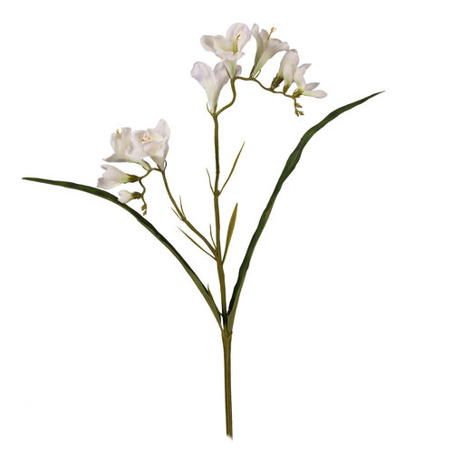 Ivory Stem Freesia