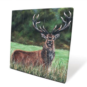 Shay Stag Canvas Picture