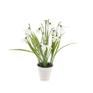Ceramic Potted Snowdrops
