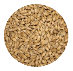 Honey Malt - Gambrinus (per lb)