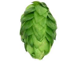 Hops - Mt. Hood Leaf
