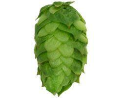 Hops - Simcoe Leaf