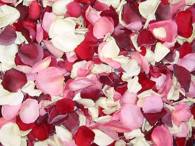 Freeze Dried ROMANTIC BLEND Rose Petals, PERFECTLY PRESERVED