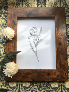 February birth flower illustration - Iris