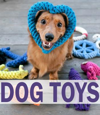 newest 57cc9 1f991 Dog Store – Pets Go Here