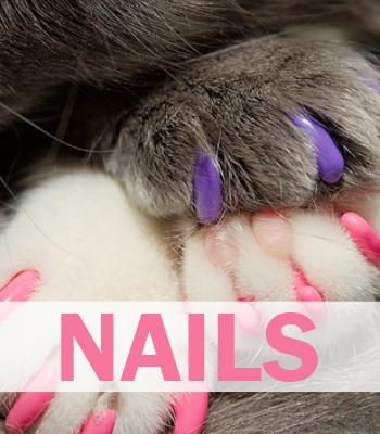 Cat Nail Care