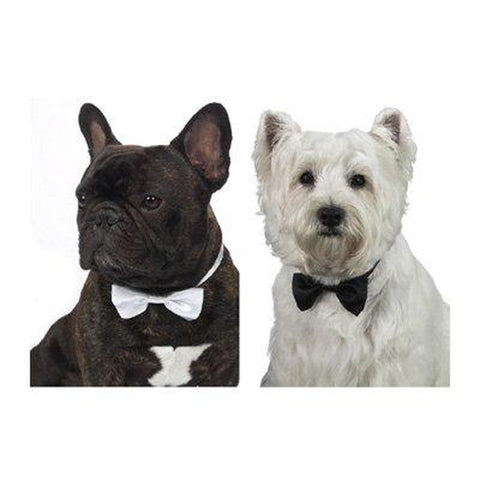 Aria Formal Dog Bowtie-DOG-Aria-Pets Go Here accessories, aria, black, bows, bowtie, dog bows Pets Go Here, petsgohere