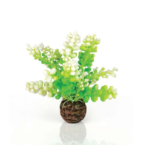 biOrb Aquatic Fern Plant Caulerpa Green fish accessories Pets Go Here, petsgohere